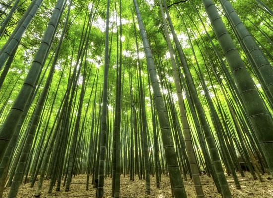 縁起物の竹